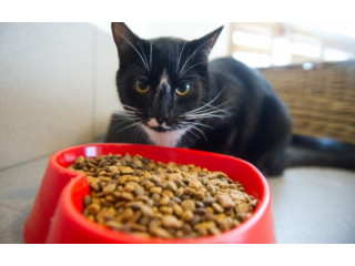 Чем кормить кошку: гид-обзор по кормам, свойства, состав
